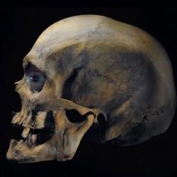 Hamlet – Horatio's Tale